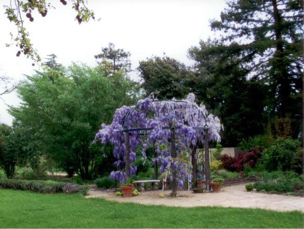 healing-garden